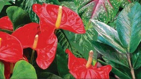 Moms Hati Hati Empat Bunga Hias Yang Lagi Viral Ini Ternyata Beracun Begini Penjelasannya